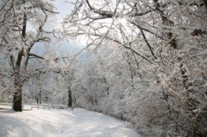 snowy winter scene with bare trees